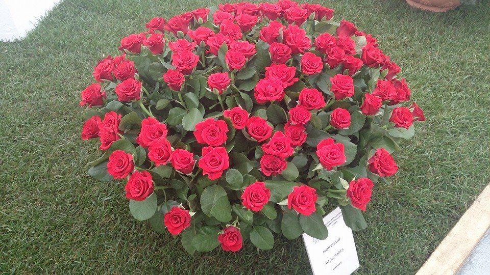expo_rose_Grasse.jpg