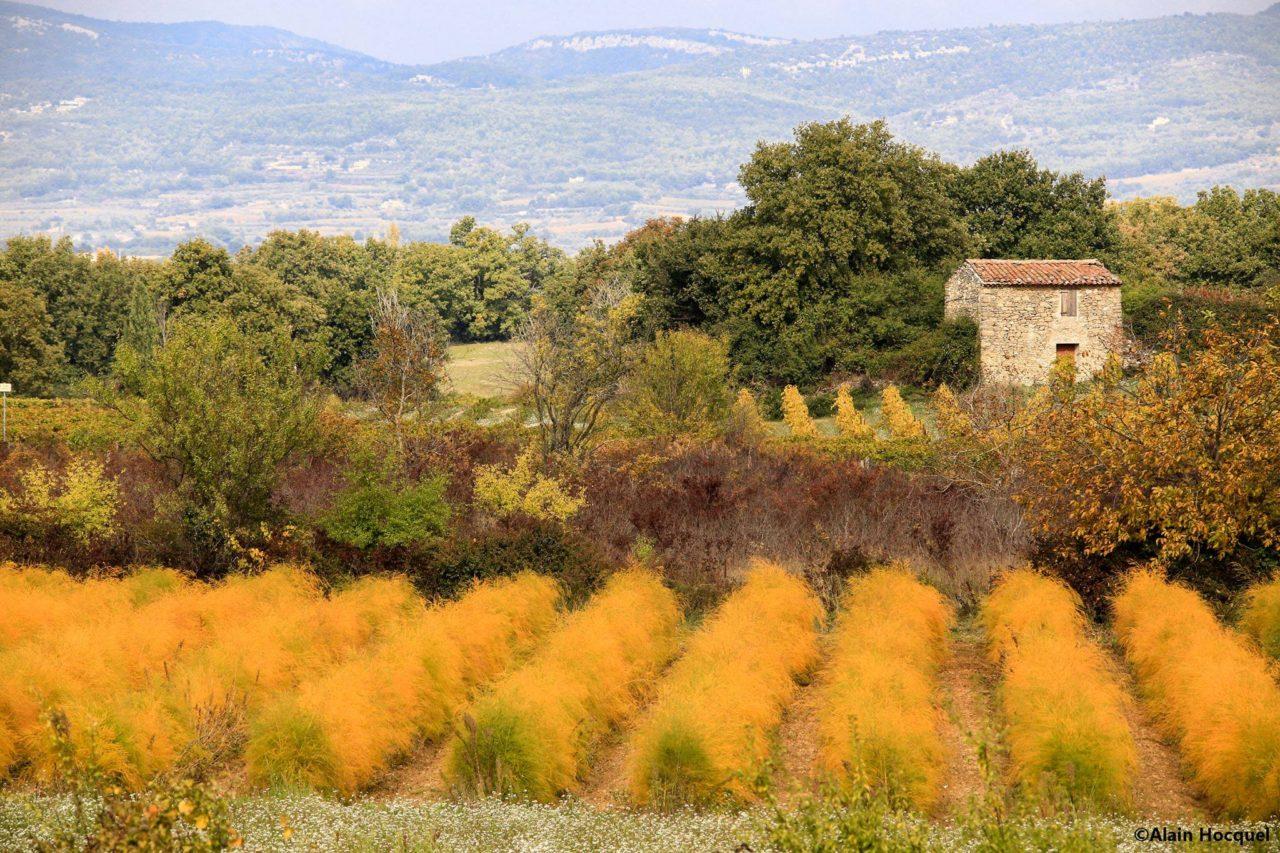 automne_en_provence.jpg