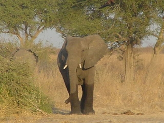 elephant_waza.jpg