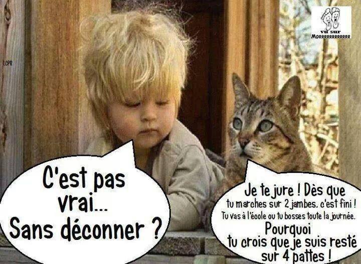 chat_et_enfant.jpg