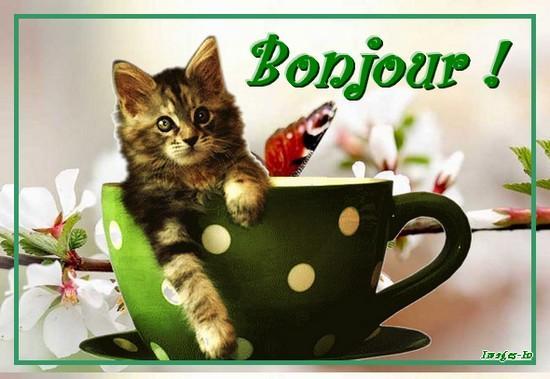 chat-bonjour-A.jpg