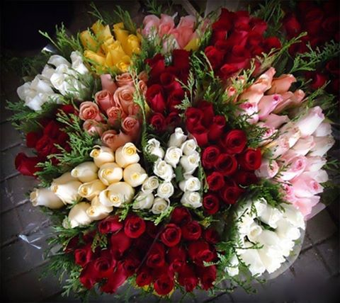 waouh_roses_sublimes.jpg