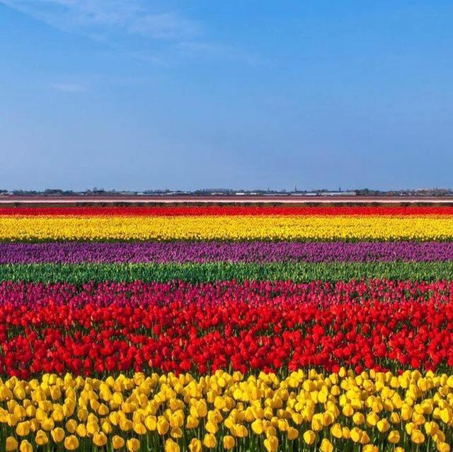 champ_de_tulipes.jpg