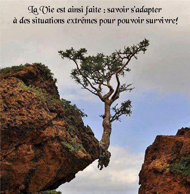 la_vie_est_ainsi_faite.jpg