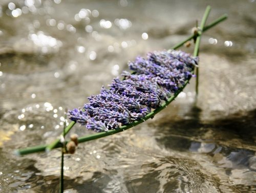 land_art_fleurs_eau.jpg