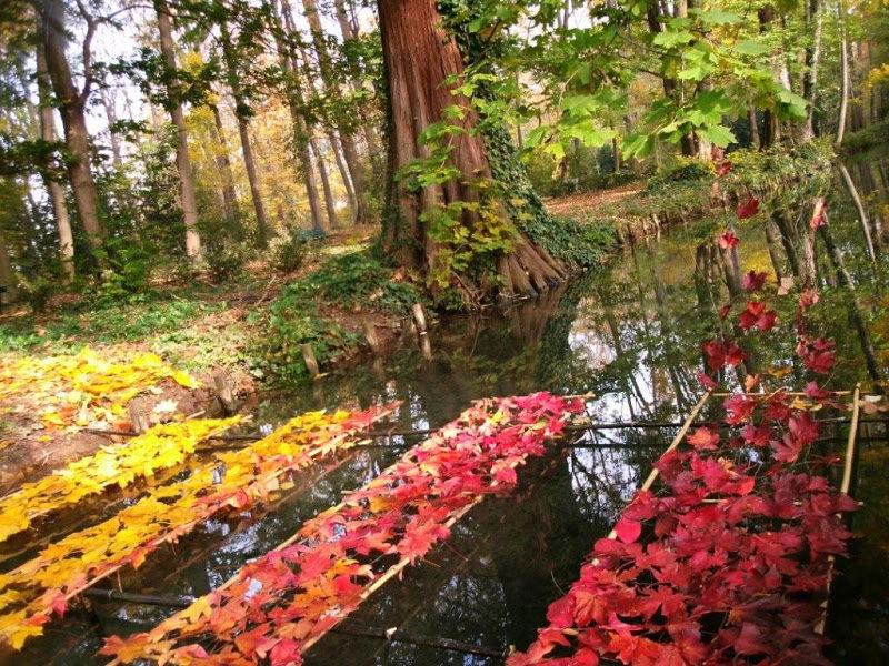 land_art_feuilles.jpg