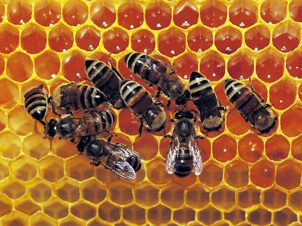 abeilles_au_travail.jpg
