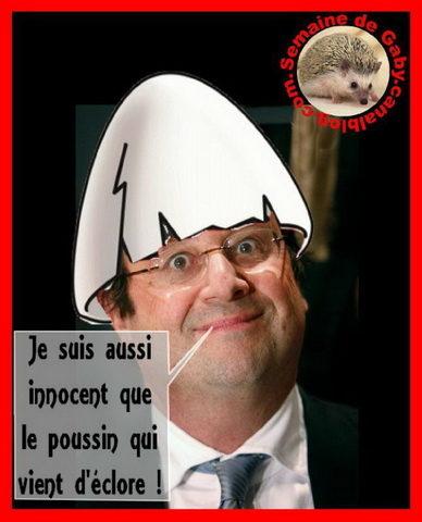 Innocent_comme_un_poussin_qui_vient_declore.jpg