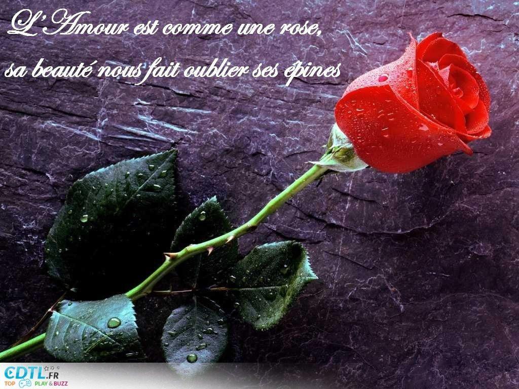 Voire Poeme Pour Vous Tousse Dans Jardin Hiver Une Rose