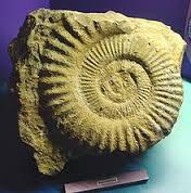 fossile.jpg