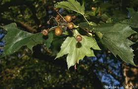 arbre_pain_doiseau.png