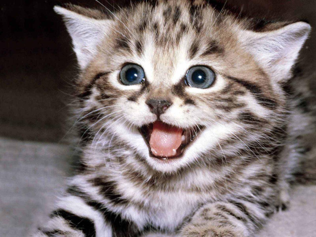 Cute-kittens-12929201-1600-1200__2_.jpg