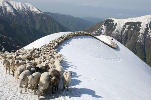 moutons_neige.jpg