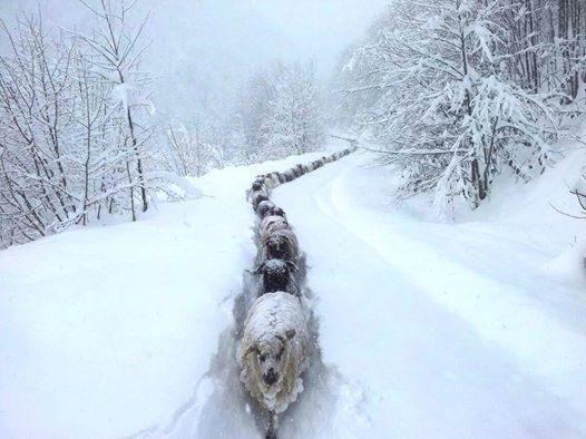 neige_moutons.jpg