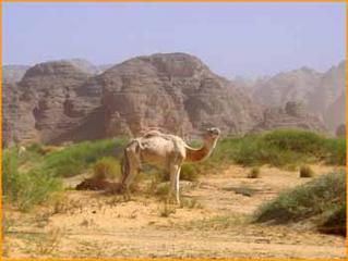 algerie_100.jpg