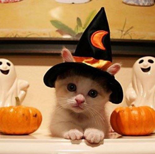 chaton-chapeau-sorciere-halloween.jpg
