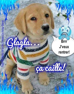 glagla_ca_caille.jpg