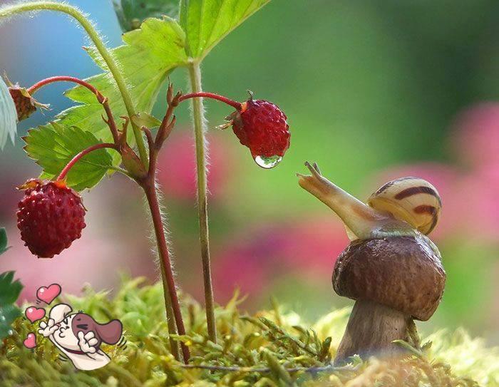 escargot_et_fraise.jpg