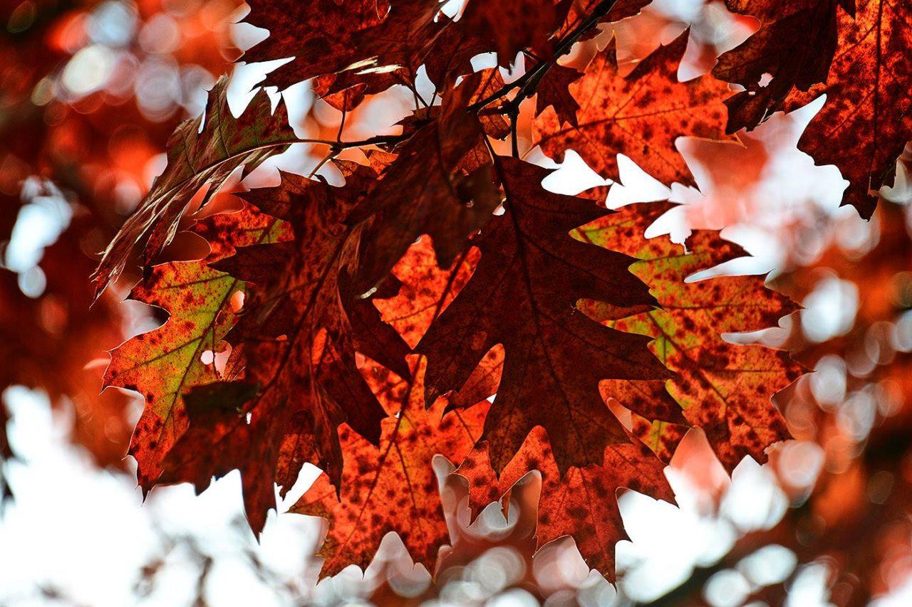 automne_est_bien_la.jpg