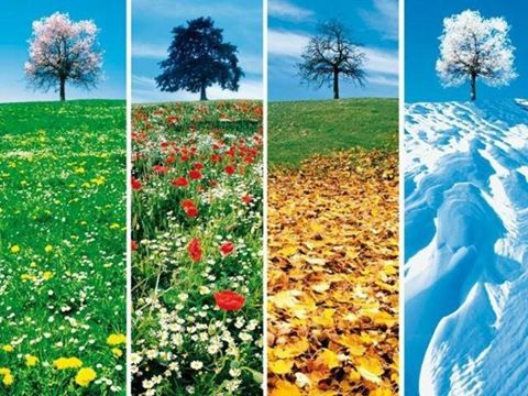 4_saisons.jpg